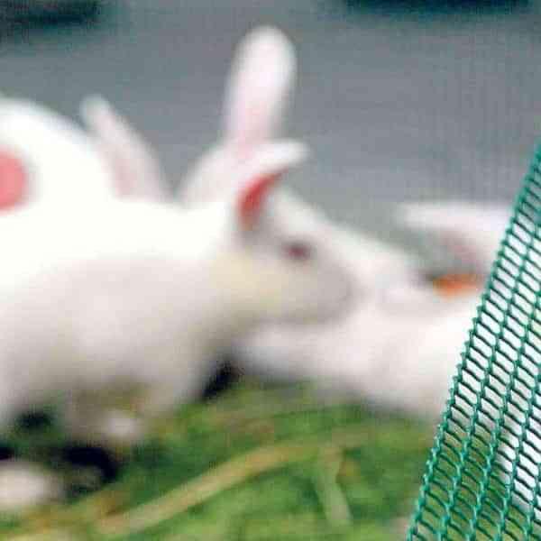 Crisis en las granjas de conejos por los costes